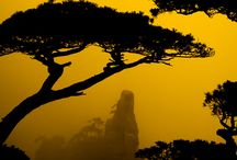 The bucket list - yellow mountains China