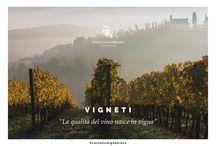 Vineyards / I Vigneti