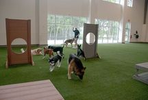 Doggie day care / by Brooke Carico