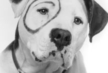 Petey from Little Rascals / Petey was a Staffordshire Terrier not a Pit Bull.   BOTH breeds are noted as making exceptional family pets and being good with children.