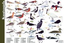 004a2 Vogels