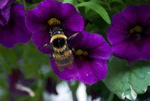 Mam's Garden / De bloemetjes engeltje in de tuin van mijn moeder.