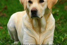 Yellow Labs / by Kat Normandin