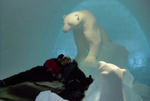 Lisa Visits ICEHOTEL & Kiruna