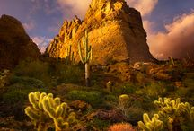Deserts & Cactus / The Beauty  & life that the Desert holds is just amazing! / by Gay Riipinen