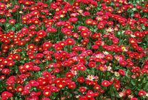 Tereny zielone - artykuły / Artykuły i zdjęcia opisujące moje prace w ogrodzie. http://terenyzielone.wordpress.com/