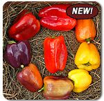 Vegetable Varieties I Love / Varieties we are growing or want to try sometime! / by Simple Gifts Farm