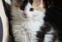Cats ↖(^ω^)↗