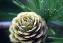 Seeds&Poods&Pinecones&Acoms / 木の実&種子&松ぼっくり&どんぐり