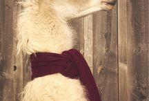 Alpaca&lama