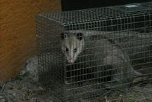 #Rat Control Orlando