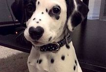 Hunder med hjerte på sin nese