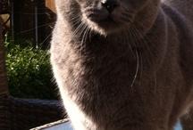 Cats' while travelling / Katten op straat of onderweg
