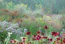 Garden / by Adriana Meijer