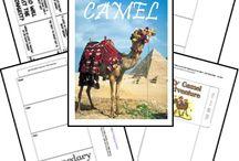 camels social studies