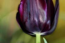 Il mio pollice nero / Come far sopravvivere piante e fiori alle mie amorevoli cure...