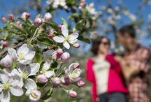 Blütenfesttage | festa della fioritura
