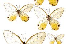 Kelebek dekopaj