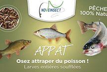 Pêche - pêcheur -appat - / #novealand #neveinsect #aquaponie