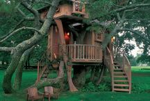 Tree house dreams