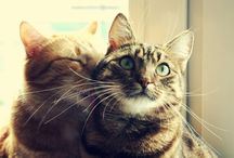 Cats / Cats and love - what matters more?