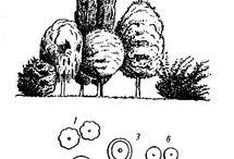 Skice /// Garden drawings