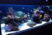 Morske Akvarium