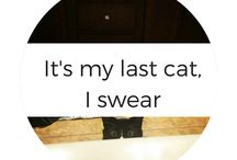 Its my Last Cat, I swear / It's My Last Cat, I swear! TAILS from my Instagram account right here on Pinterest. With a houseful of 7 pets, I share with you how I survive the day under tons of fur, 2 kids, and just trying to be me.  / by MomDot (Trisha)