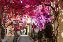 Smells Like.... Greece
