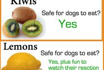 Safe for dogs