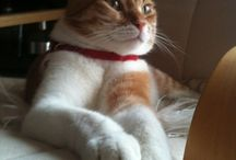 """ARISTOCRACY"" / My handsome cat!!!"
