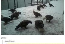 Humor / How to attract eagles...
