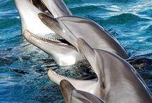 Magnificent sea mammals / Beautiful creatures living in our seas