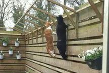 macska akadály udvarra