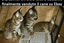 gatti / meaow