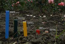 interactive documentaries|infographics