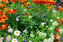 Flori  si arbusti la umbra
