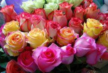 The most beautiful flowers /  see details http://tvittni.blogspot.com/