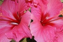kwiat / kolor