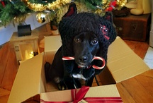 Christmas pictures / by Elizabeth Giannone