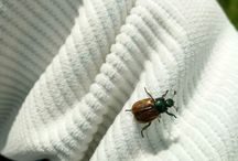 Bugs, beetles, insects, of all kinds