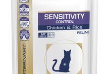 Cat Dry Food From 4Petneeds.com