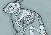 動物 解剖図