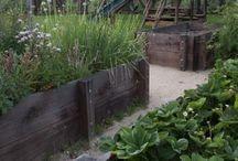 My garden / Мой сад