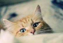 l meow l