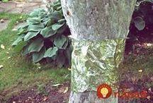 riesenie mravcom a vosiek na stromoch