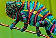 Chameleóny