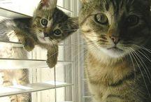Katter / Morsomme, søte og kule