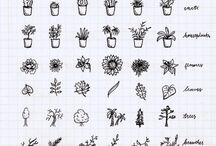 Plants to draw