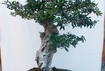 Bonsai e suiseki / bonsai, pre-bonsai, suiseki, biseki, decorative stones, viewing stones